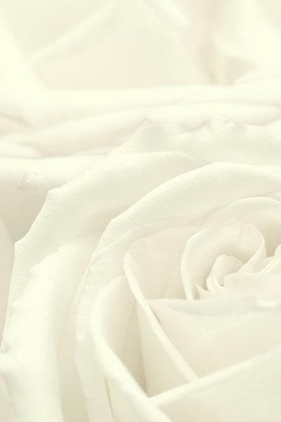 rosepetal