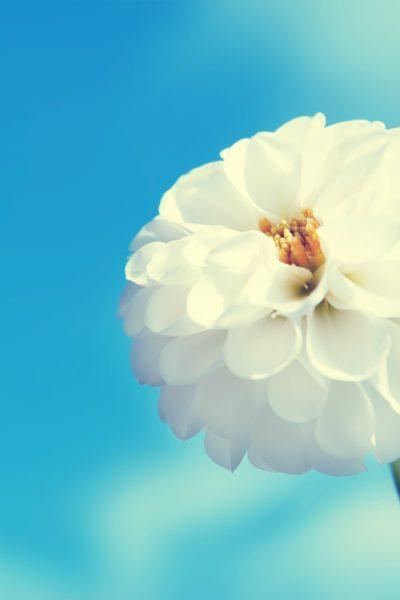 blue_sky_white_flowers_wallpaper_1600x1200